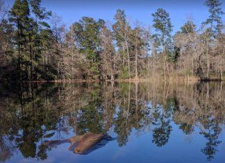 W G Jones State Forest